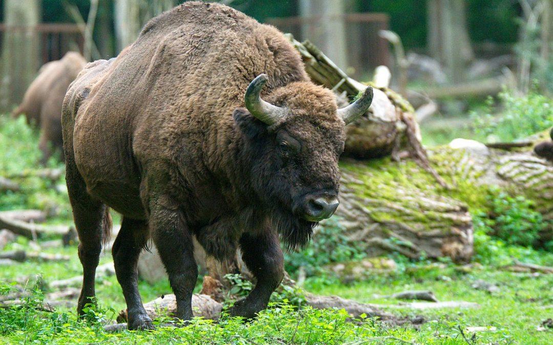 Die Wildnis ruft bereits seit 90 Jahren