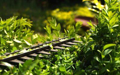 Vorsicht beim Heckenschnitt im Frühjahr und Sommer