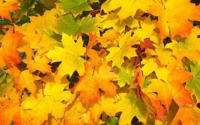 Laub und die Straßenreinigung im Herbst