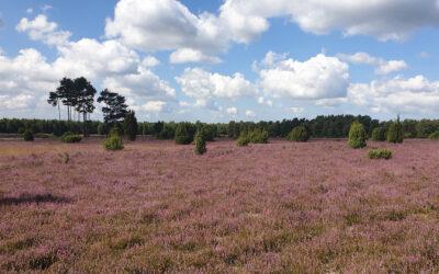 Die Misselhorner Heide